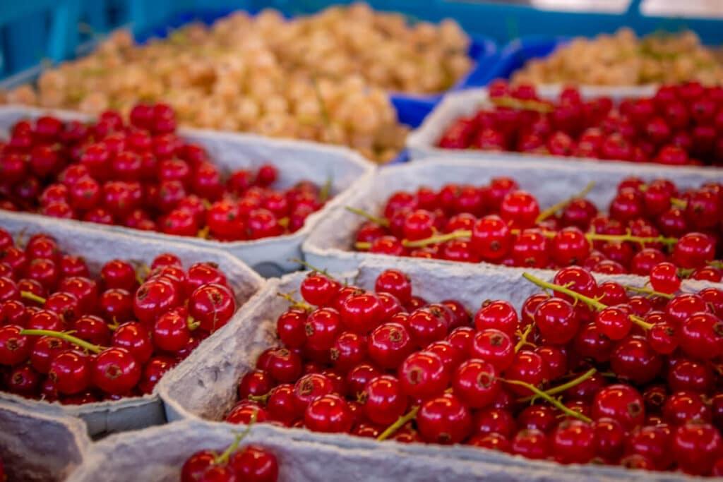 Marktstand Gärtnerei Baum Langenfelder Wochenmarkt Bild 11
