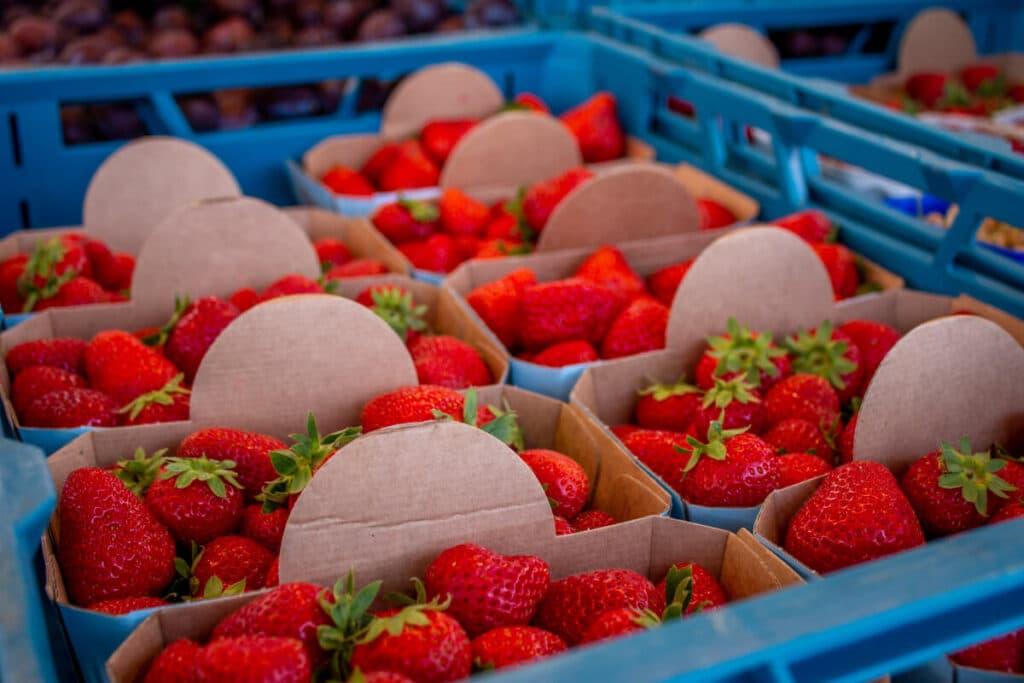 Marktstand Gärtnerei Baum Langenfelder Wochenmarkt Bild 12