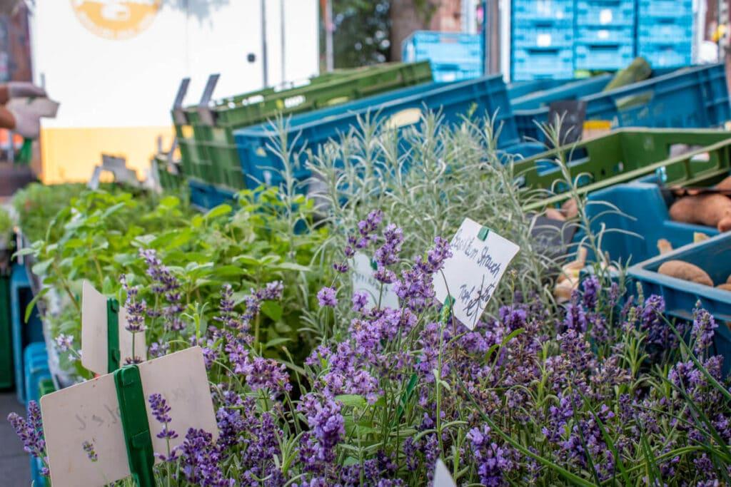 Marktstand Gärtnerei Baum Langenfelder Wochenmarkt Bild 14