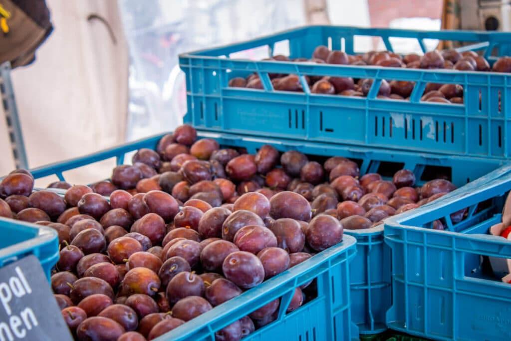 Marktstand Gärtnerei Baum Langenfelder Wochenmarkt Bild 8