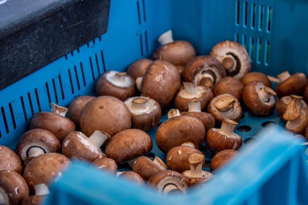 Marktstand Gärtnerei Baum Langenfelder Wochenmarkt Bild 7