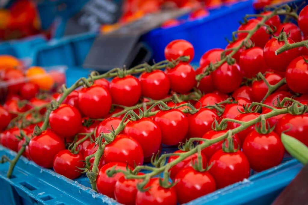 Marktstand Gärtnerei Baum Langenfelder Wochenmarkt Bild 5
